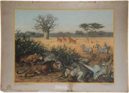 Serie - Dieren in hun omgeving - 2e Serie, Buiten ons land