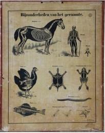 Serie - [Biologieplaten van H. Froment]