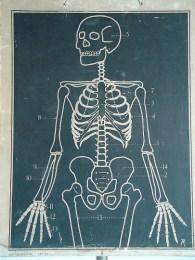 Serie - [Menselijk lichaam]