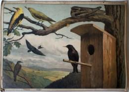 Uitgever - Bund f�r Vogelschutz