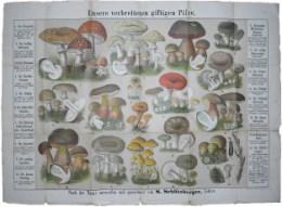 Serie - Essbaren und giftigen Pilze