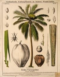 Serie - Ausl�ndische Culturpflanzen in bunten Wand-Tafeln [I&II, Wit]