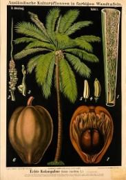 Serie - Ausl�ndische Kulturpflanzen in farbigen Wandtafeln [Eerste uitgave, I&II, Zwart]