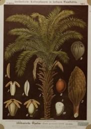 Serie - Ausl�ndische Kulturpflanzen in farbigen Wandtafeln [Nieuwe uitgave, I,II&III, Zwart]