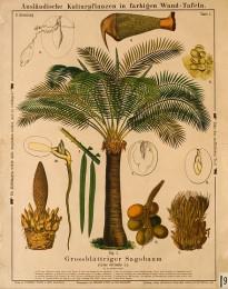 Serie - Ausl�ndische Kulturpflanzen in farbigen Wand-Tafeln [II, Wit]