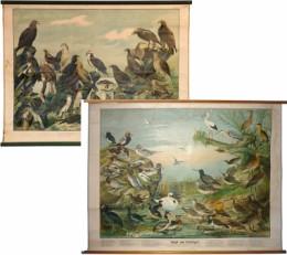 Serie - Vogelbilder [allen samen]