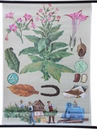 Serie - Ausl�ndische Nutzpflanzen