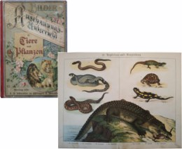 Serie - Bilder zum Anschauungs-Unterricht f�r die Jugend. (II. Teil  [Nieuw]). Tiere und Pflanzen