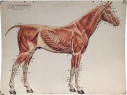 Serie - Das Pferd
