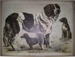 Serie - Engleders Wandtafeln für den naturkundlichen Unterricht. Tierkunde