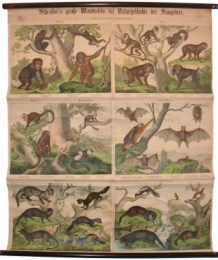 Serie - Schreibers grosse Wandtafeln der Naturgeschichte