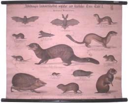 Serie - Abbildungen landwirtschaftlich n�tzlicher und sch�dlicher Tiere