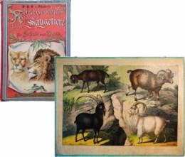 Serie - Dr. G.H. Schubert's Naturgeschichte der S�ugetiere (I. Abteilung, 1. Teil)