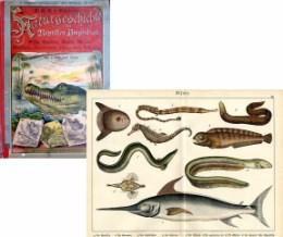 Serie - Dr. G.H. Schubert's Naturgeschichte der Reptilien, Amphibien (I. Abteilung, 3. Teil)