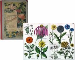 Serie - Dr. G.H. Schubert's Naturgeschichte des Pflanzenreichs (II. Abteilung)