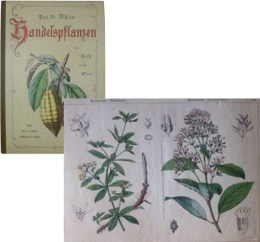 Serie - Die wichtigeren Handelspflanzen