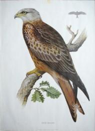 Serie - Cramers biologische wandplaten - Serie 1. Roofvogels