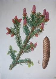 Serie - Cramers biologische wandplaten - Serie 2. Bomen