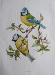 Serie - Cramers biologische wandplaten - Serie 3. Zangvogels I