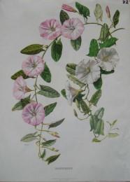 Serie - Cramers biologische wandplaten - Serie 4. Bloemen I