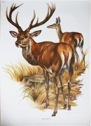 Serie - Cramers biologische wandplaten - Serie 10. Zoogdieren I (Europese)