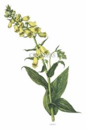 Serie - Cramers biologische wandplaten - Serie 17. Bloemen II (Giftige planten)