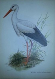 Serie - Cramers naturkundliche Anschauungstafeln - Serie 18. Sumpf- und Wasservogel
