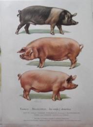 Serie - Cramers biologische wandplaten - Serie 20. Boerderijdieren