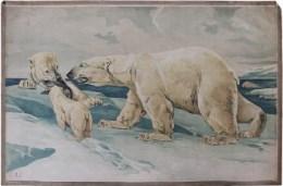 Serie - Dr. H. Täuber Zoologische Wandbilder