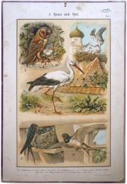 Serie - Vijftien Zoologische wandplaten