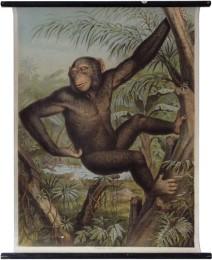 Serie - Lehmann-Leutemann - Zoologischer Atlas