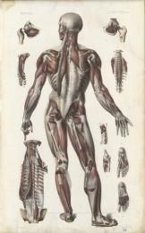 Serie - Bourgery et Jacob. Anatomie �l�mentaire
