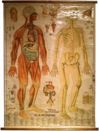 Serie - Tableaux anatomique de l'homme