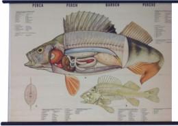 Serie - Anatomie van de gewervelde dieren