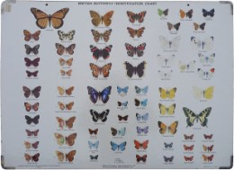 Serie - British Butterfly Identification Chart