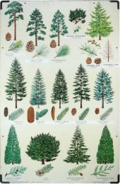 Serie - Tree Charts of Britain and Northern Europe
