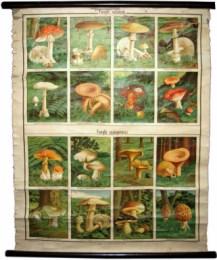 Serie - Funghi