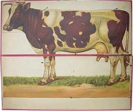Serie - [De koe - Uitklapbaar]