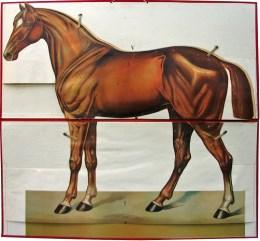 Serie - [Het paard - Uitklapbaar]