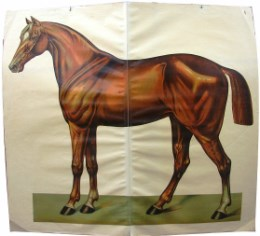 Serie - [Het paard - Losbladig]