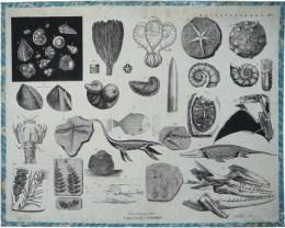 Serie - Schoolplaten ten gebruike bij het onderwijs in de dier-, plant- en delfstofkunde - Delfstofkunde