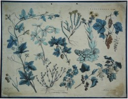 Serie - Schoolplaten ten gebruike bij het onderwijs in de dier-, plant- en delfstofkunde - Plantkunde