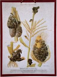 Serie - Atlas der Krankheiten der landwirtschaflichen Kulturpflanzen