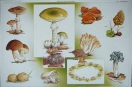 Serie - Maarten de Jongh's Natuurplaten