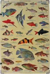 Serie - Tropical Aquarium Fishes