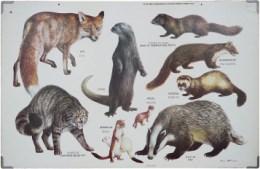 Serie - Zoogdieren