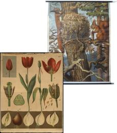 Serie - Wandplaten ten gebruike bij het onderwijs in de Natuurlijke Historie