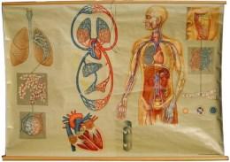 Serie - Unser k�rper. Hagemanns Lehrtafeln fur den menschenkundichen unterricht