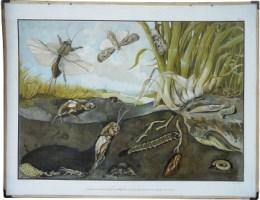 Serie - Schreibers 12 gro�e Wandtafeln der f�r den Ackerbau sch�dlichen Tiere