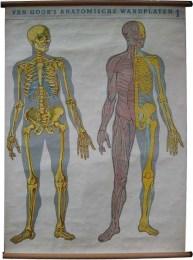 Serie - Van Goor's anatomische wandplaten